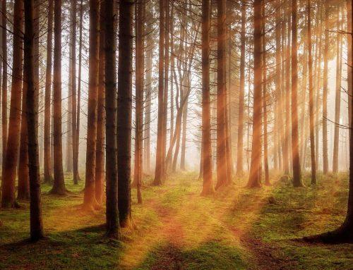 3,04 Billionen Bäume sind nicht genug